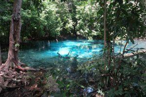 Jungle Tour - Blue Pool